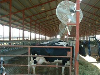 پاورپوینت تنش گرمایی در گاو شیری